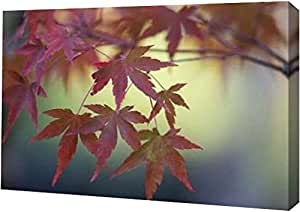 "PrintArt GW-POD-11-PSCRN-509-12x8""日本枫树 IV"" Rita Crane 画廊装裱艺术微喷油画艺术印刷品 黑色 24"" x 16"" GW-POD-11-PSCRN-509-24x16"