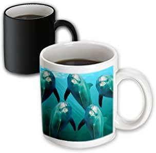 3dRose Curious Dolphins - Magic Transforming Mug, 11oz (mug_1071_3)