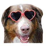 G012 狗狗心形复古太阳镜带护目镜,中号品种,20-60 磅