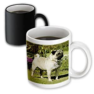 3dRose 狗狗 Pug - Fawn Pug - 马克杯 黑色/白色 11-oz Magic Transforming Mug mug_498_3