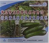 黄瓜常见病害识别与防治荷兰黄瓜秋季基质栽培技术(VCD)
