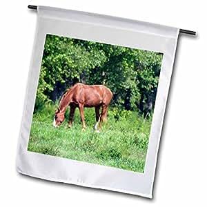 whiteoak 摄影动物印刷品–A Horse 吃草–旗帜 12 x 18 inch Garden Flag