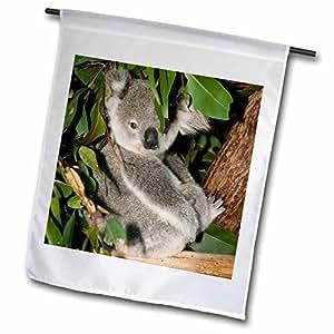 danita delimont–熊–澳大利亚, brisbane , FIG Tree 口袋,考拉 bears-au01wbi0119–Walter bibikow–绘图本国旗 12 x 18 inch Garden Flag