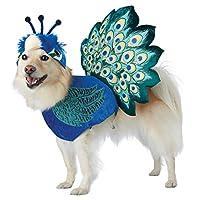 """加州服饰 Pretty as a Peacock 宠物服装- """"Multi"""" 大"""