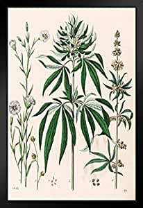 海报 Foundry 大麻植物大麻插图 1853 年 ProFrames 出品 裱框海报 14x20 inches 183406