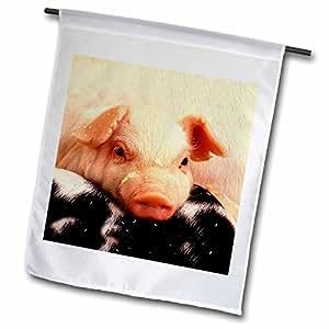 农场动物–piglets–旗帜 12 x 18 inch Garden Flag
