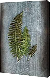 "PrintArt ""Woodland Fern VI""由 Sue Schlabach 创作画廊包边艺术微喷帆布艺术印刷品 11"" x 16"" GW-POD-38-22500-11x16"