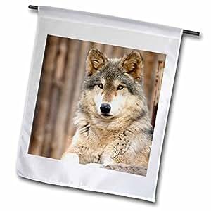 danita delimont–狼–灰色狼, folsom 城市动物园,加利福尼亚–US05tau0105–tananarive aubert–旗帜 12 x 18 inch Garden Flag