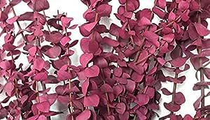 CalCastle Craft 天然干燥桉树枝 大号 76.2 厘米高 散装 1 磅 / 8 盎司 Washed Pink - 8 Oz