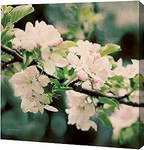 "PrintArt GW-POD-38-23799-20x20""Apple Blossoms I Crop"" Elizabeth Urquhart 画廊包边艺术微喷油画艺术印刷品,50.80 cm x 50.80 cm"