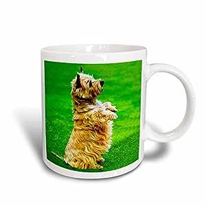 3dRose Cairn Terrier Mug, 11-Ounce