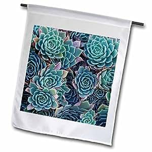 danita delimont–多肉–echeveria elegans 多肉,新 zealand-au02dwa4881–David WALL–旗帜 12 x 18 inch Garden Flag