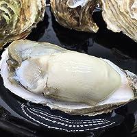 【贝鲜生生蚝】2.5kg鲜活生蚝 现捞现发 牡蛎 顺丰空运包邮 C级蚝(140-190g)