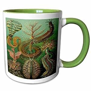 3drose florene 复古–著名生物学家素描 OF chaetopoda sealife 从1800S–马克杯 绿色/白色 11-oz Two-Tone Green Mug