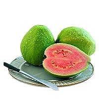 【低糖水果 和酸梅粉一起更好吃】红心芭乐5斤9-12个 番石榴 新鲜水果 福建特产