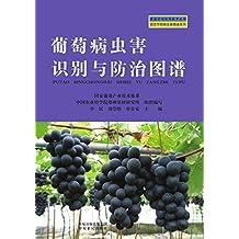 葡萄病虫害识别与防治图谱 (家庭农场实用技术丛书·园艺作物病虫害图谱系列)