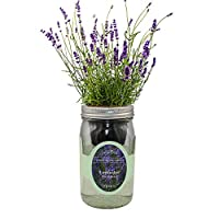 环境水培草本生长套件,自动浇水梅森罐草本花园入门套件,室内种植您自己的草本植物(薰衣草明斯特)