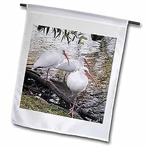JACKIE Popp 天然 N 野生动物 storks–GREAT IBIS–旗帜 12 x 18 inch Garden Flag