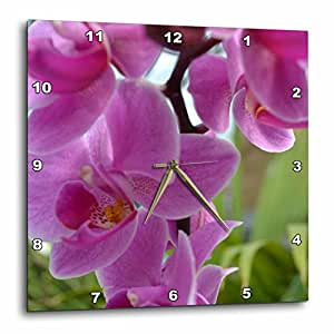 3dRose dpp_22672_3 Pink Orchids-Wall Clock, 15 by 15-Inch