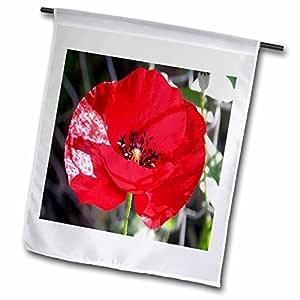 taiche–亚克力画–POPPY–Scarlet POPPY–Poppies , remembrance 天, armistice 天, remembrance ,野花,玉米 POPPY–旗帜 12 x 18 inch Garden Flag