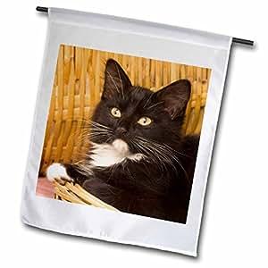 danita delimont–猫–short-haired 小猫 ON 篮盖,猫–NA02mpr0102–maresa pryor–旗帜 12 x 18 inch Garden Flag