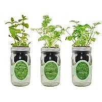 环境水培草本种植套件,自动浇水梅森罐草本花园入门套件,室内种植您自己的草本植物(薄荷、香菜和欧芹)