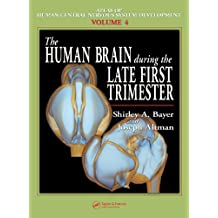 The Human Brain During the Late First Trimester (Atlas of Human Central Nervous System Development Book 4) (English Edition)