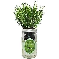 环保水培草本生长套件,自动浇水梅森罐草本花园入门套件,室内,种植您自己的草本植物 Thyme