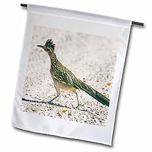 danita delimont–鸟–新墨西哥州, bosque DEL APACHE , roadrunner 鸟–us32bja0086–jaynes 画廊–旗帜 12 x 18 inch Garden Flag
