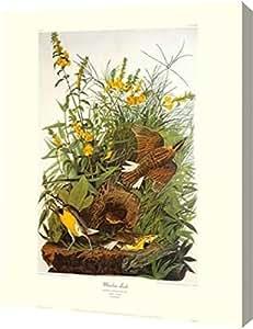 "PrintArt GW-POD-64-132756-16x20 ""Meadow Lark(装饰边界)""由 John James Audubon 画廊装裱艺术微喷帆布艺术印刷品 29"" x 36"" GW-POD-64-132756-29x36"