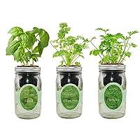 环境水培草本种植套件,自动浇水梅森罐草本花园入门套件,室内种植您自己的草本植物(罗勒,香菜和欧芹)