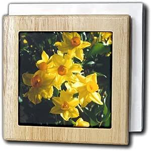 "3dRose nh_3134_1""Daffodils"" 餐巾架,15.24 cm"