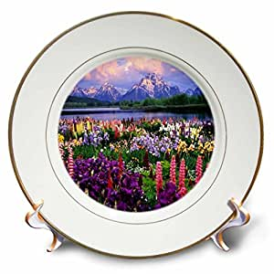 florene Flowers–怀俄明州 wildflowers–盘子