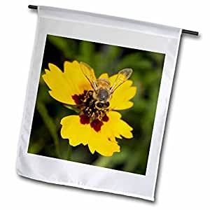 danita delimont–bees–蜜蜂,海岸 Bend ,德克萨斯–us44mpr0113–maresa pryor–旗帜 12 x 18 inch Garden Flag