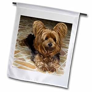 3dRose fl_201113_1 带有绘图效果花园旗的可爱约克夏梗犬,30.48 x 45.72 cm