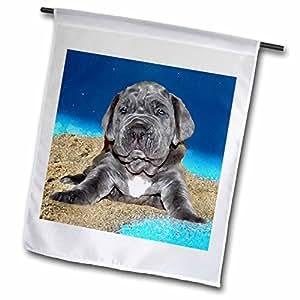 狗 neapolitan mastiff–neapolitan 獒犬小狗–旗帜 12 x 18 inch Garden Flag