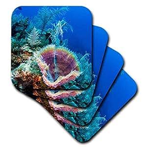 danita delimont–海洋生物–天蓝色花瓶海绵, jardines DE LA Reina NP 古巴,加勒比–杯垫 Not Applicable set-of-4-Soft