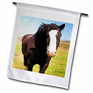 Jos fauxtographee realistic–A beautiful 黑色和白色马站立 ON A 绿色 FIELD OF 草特写与 white ON FACE–旗帜 12 x 18 inch Garden Flag