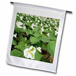 3dRose fl_91193_1 Trillium Flowering 植物,密歇根州 US23 DFR0229 花园旗,30.48 x 45.72 厘米