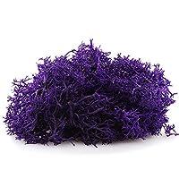 1 磅(约 453.6 克)明亮驯鹿苔藓 - 室内室外适用于盆栽植物、玻璃容器、仙女花园、艺术和工艺品或花卉装饰设计(黄*) 紫色 6400X-1LB