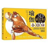 瑜伽3D解剖书1(肌肉篇)