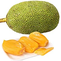 【确认熟后才切开】海南菠萝蜜27-30斤/个 木菠萝 新鲜水果