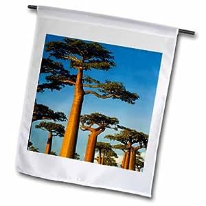 3dRose Morondava附近的Baobab 马达加斯加 AF24 AMR0003 Andres Morya Hinojosa 花园旗,30.48 x 45.72 cm