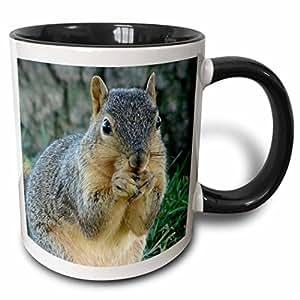 3drose CASSIE peters 摄影–松鼠吃橡树果 photographed 来自 angelandspot–马克杯 黑色/白色 11 oz