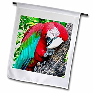 鸟 - Greenwing Macaw - 旗帜 12 x 18 inch Garden Flag fl_1027_1