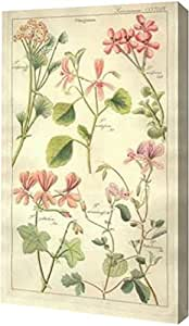 "PrintArt GW-POD-69-DD06-7x12""Geraniums"" 由 David Dietrich 创作画廊装裱艺术微喷油画艺术印刷品,17.78 cm x 30.48 cm"