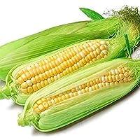 新鲜玉米 (8斤装) 甜玉米 水果玉米 蔬菜玉米 云南甜脆玉米棒
