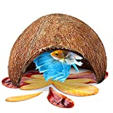SunGrow 洞穴,天然栖息地,椰子壳,柔软纹理光滑边缘和宽敞的隐藏式,供贝塔鱼休息和品种使用,保持水质。