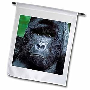 danita delimont–gorillas–zaire , umubano NP ,野银背 MOUNTAIN gorilla-af50bja0001–janyes GALLERY–旗帜 12 x 18 inch Garden Flag