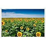 花锡标志 向日葵种子 植物田 杆 天空云距离 19508 Waller's Decor 出(19.05 厘米 x 29.97 厘米)